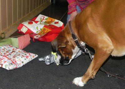 Hunde-Weihnacht 2015 13