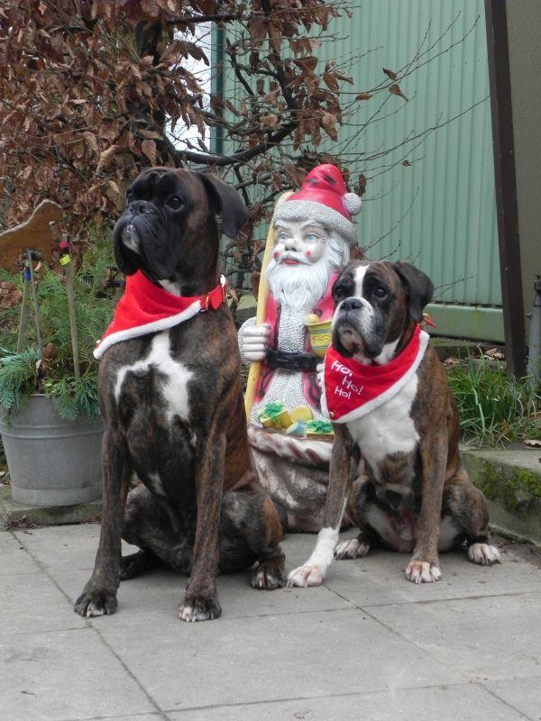 Hunde-Weihnacht 2016 1