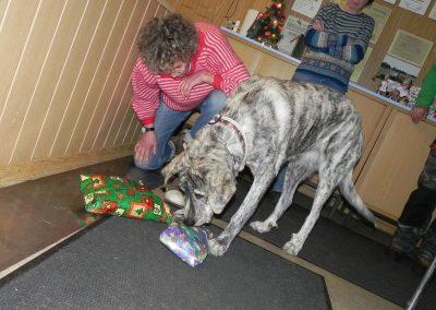 Hunde-Weihnacht 2016 4