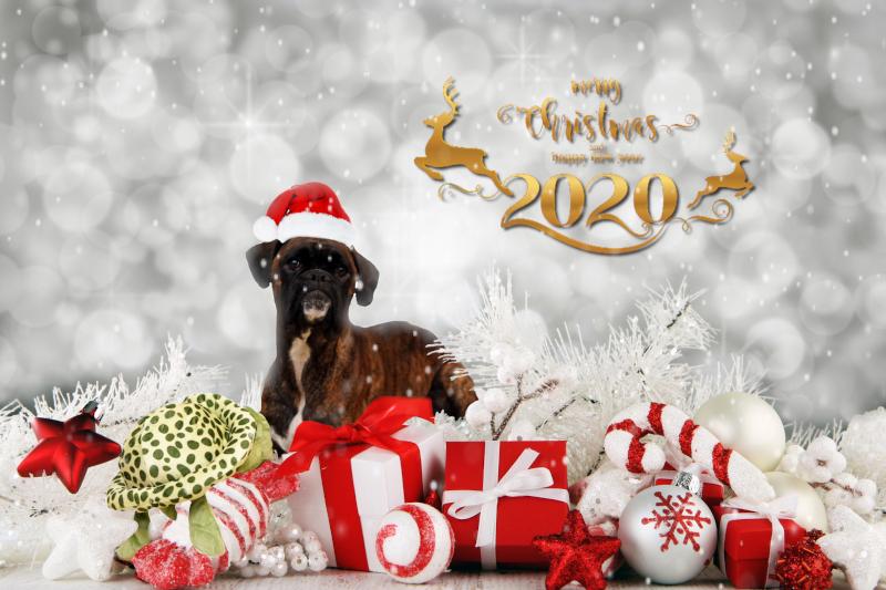 Hunde-Weihnacht 2019